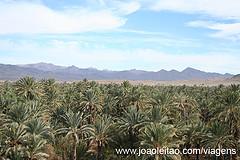 Gaj palmowy w Agz, Maroko