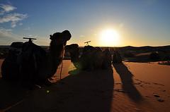 Zachód słońca na pustyni w Maroku